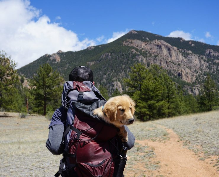 8 Best Dog Carrier Backpacks Available in 2020